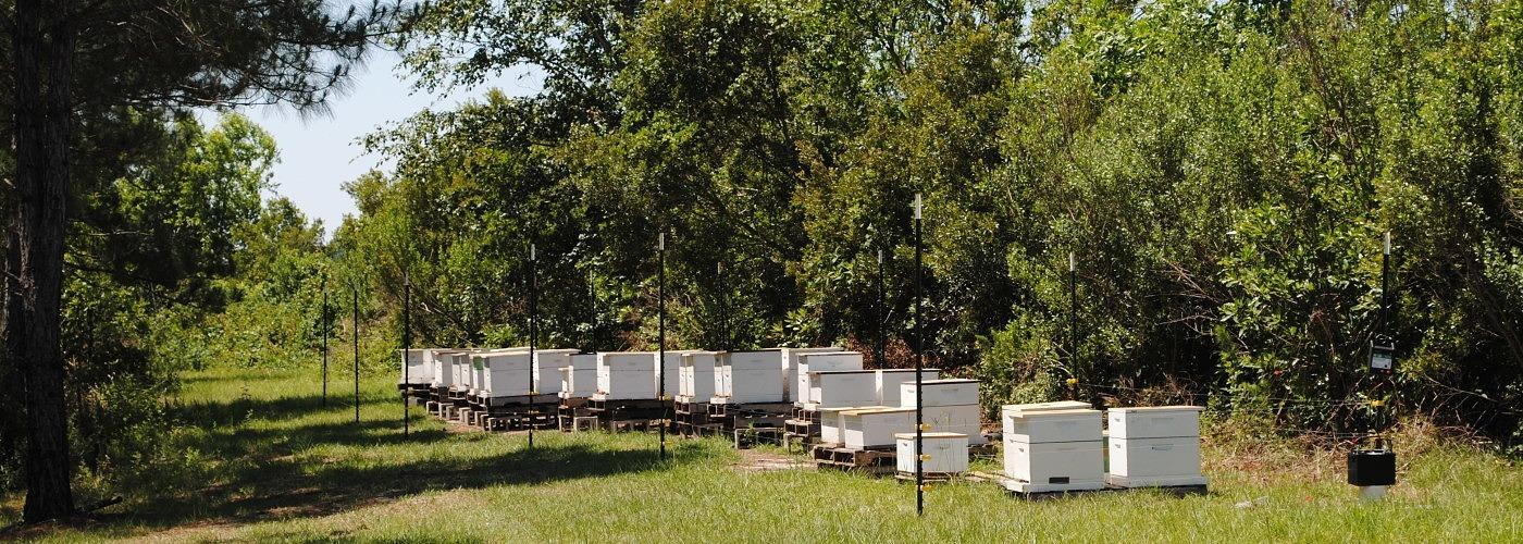 Monsanto ha arruinado nuestra miel � Est� contaminada con glifosato de Roundup