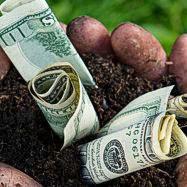 Monsanto paga secretamente a quienes contaminan cultivos org�nicos con transg�nicos