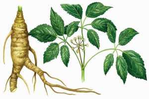 Plantas prohibidas para curar enfermedades graves