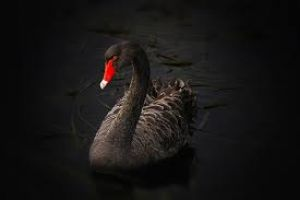 2015 black swans abounding � safe haven gold to benefit
